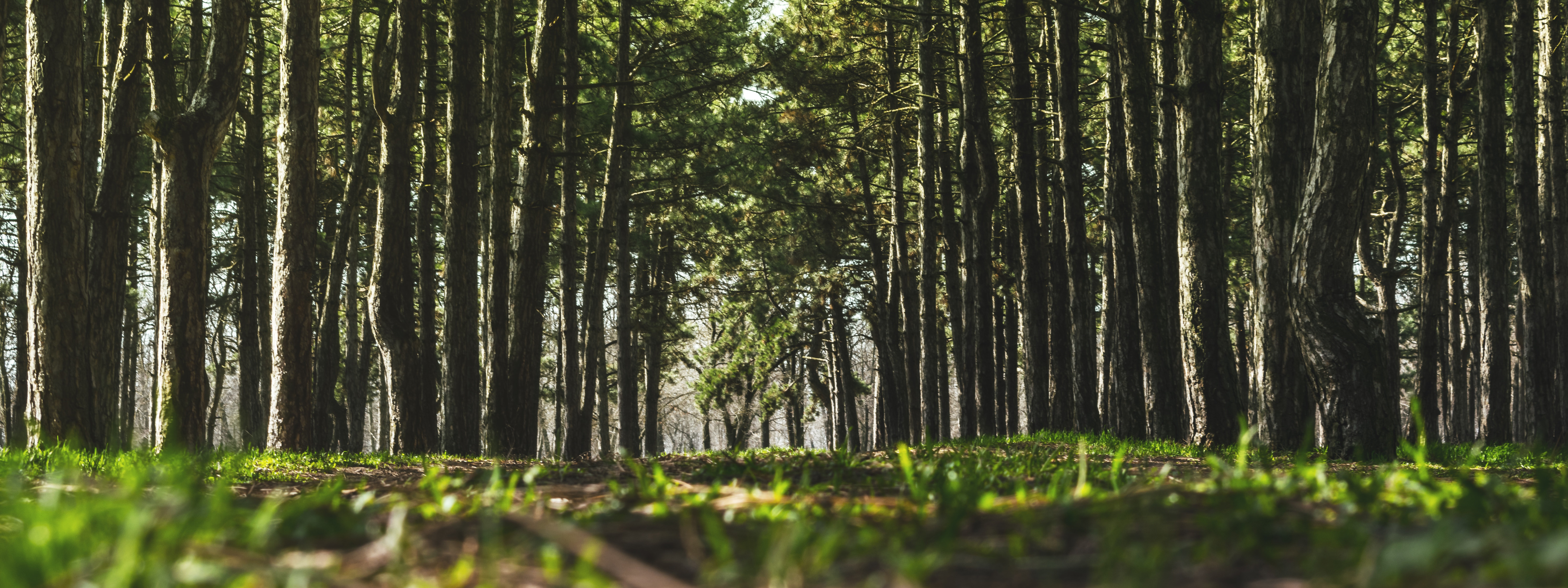 Is forest-biomass electricity carbon neutral?